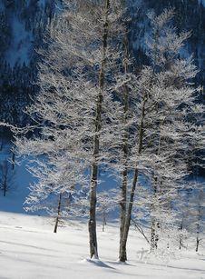 Free Barren Tree Is Winter Freeze 1 Royalty Free Stock Photo - 1662615