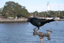 Free Blackbird On A Spigot Stock Photography - 1662942