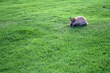 Free Bunny Stock Photo - 1663340