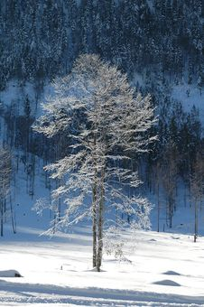 Free Barren Trees In Freeze 3 Stock Photos - 1663673