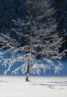 Free Frozen Barren Trees 4 Stock Photos - 1663773