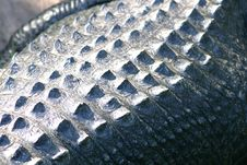 Free Crocodile Skin Close Up Stock Image - 1663871