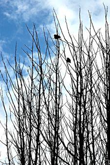 Free Tree Royalty Free Stock Photography - 1664057