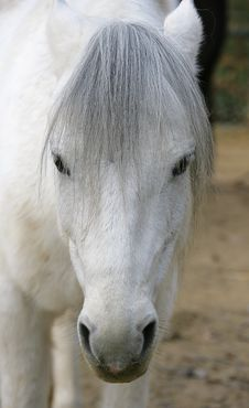 Pony 2 Stock Photography