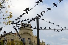 Free Pigeons On Wires Stock Photography - 1665342