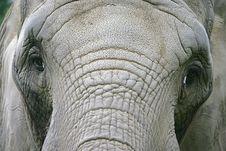 Free Elephant 11 Royalty Free Stock Images - 1665739