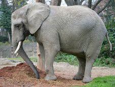 Free Elephant 14 Royalty Free Stock Photography - 1665997