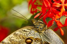 Free Butterfly On Leaf Stock Image - 1669631