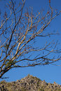 Free Barren Tree Against Blue Sky Royalty Free Stock Image - 16601806