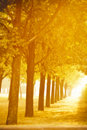 Free Autumn Alley Royalty Free Stock Images - 16608899