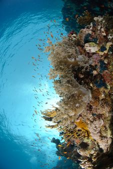Free Colourful Tropical Reef Royalty Free Stock Photos - 16600038