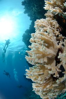 Free Colourful Tropical Reef Royalty Free Stock Image - 16600046