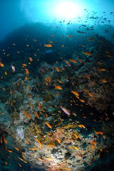 Free Colourful Tropical Reef And Shoal Of Fish Royalty Free Stock Photography - 16600057