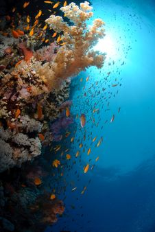 Free Colourful Tropical Reef Royalty Free Stock Photos - 16600098
