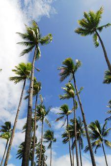 Free Tropics Stock Images - 16600104