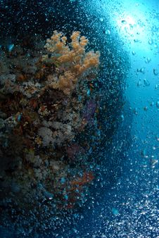 Free Bubbles Rising Up Over Coral Reef Stock Photo - 16600110