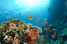Free Colourful Tropical Reef Royalty Free Stock Photography - 16600187