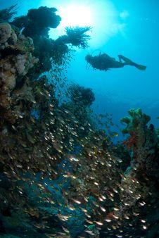 Free Silhouette Of Female Scuba Diver Stock Image - 16600321