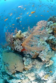 Free Colourful Tropical Reef Royalty Free Stock Photos - 16600558
