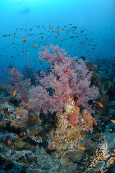 Free Colourful Tropical Reef Stock Photography - 16600582