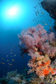 Free Colourful Tropical Reef Stock Photography - 16600612