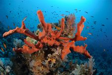 Free Colourful Tropical Reef Stock Photo - 16600650