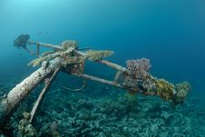 Free Shipwreck In Shallow Water Stock Images - 16600684
