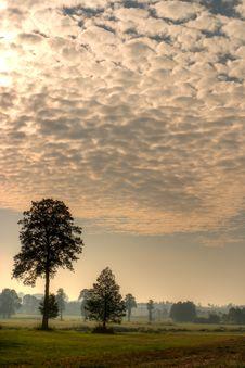 Free Trees Stock Photography - 16601672