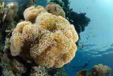 Free Soft Coral Reef Royalty Free Stock Photos - 16602028