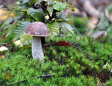 Free Mushroom Stock Photography - 16602762