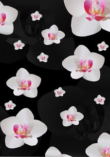 Free Background With White Orchid Flowers Stock Images - 16606324