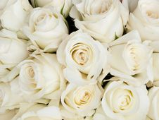 Free Small Roses Stock Image - 16606961