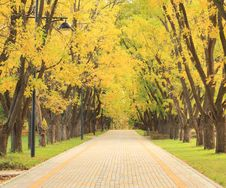 Free Autumn Alley In The Park Royalty Free Stock Photos - 16607918