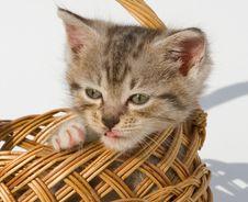 Free Kitten Stock Images - 16608404