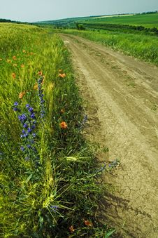 Free Country Road Among Fields Stock Image - 16608911
