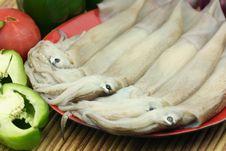 Free Squid Stock Photo - 16609010