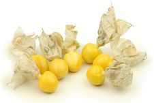 Free Physalis Royalty Free Stock Photos - 16609088