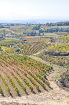 Vineyards At La Rioja, Spain Royalty Free Stock Photos