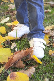 Free Step Through The Autumn Leaves Royalty Free Stock Photos - 16610028