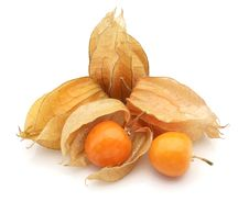 Free Physalis Stock Images - 16610574