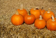 Free Ripe Orange Pumpkins On Brown Hay Bales Stock Photos - 16611613