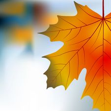 Free Red Yellow Maple Autumnal Background Stock Images - 16612724
