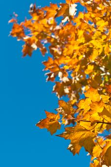 Free Autumn Leaves With Blue Sky Royalty Free Stock Photos - 16614798