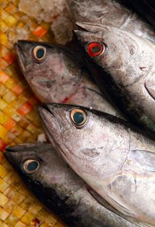 Fish Heads At A Fishmonger Royalty Free Stock Photo