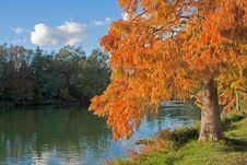 Free Orange Larch On A Lake Shore Stock Photo - 16617180
