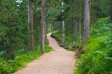 Free Jogging Mountain Track In Summer Stock Image - 16618621