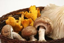Free Mushrooms In Autumn Royalty Free Stock Image - 16619516