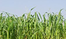 Free Grass Stock Photography - 16619552