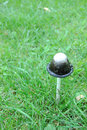 Free One Mushroom On The Green Grass Royalty Free Stock Image - 16620616