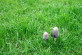 Free Couple Small Mushrooms On The Green Bright Grass Royalty Free Stock Photos - 16620658